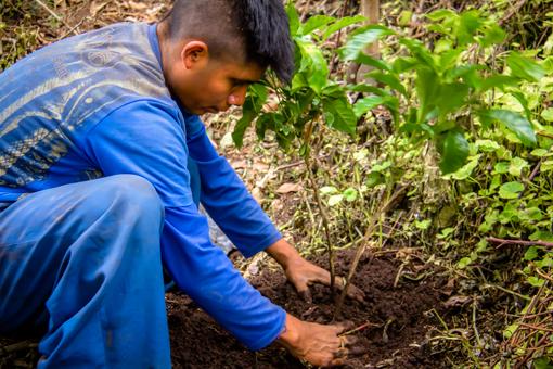 Finca_Deborah_Process_Planting