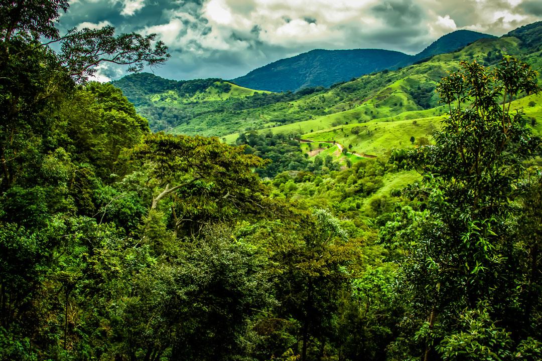 핑카데보라는 환경을 생각합니다. 농장은 태양열발전 시스템으로 가동되어 농작물 가공 공장  및 직원 숙소에 필요한 전력을 공급합니다.