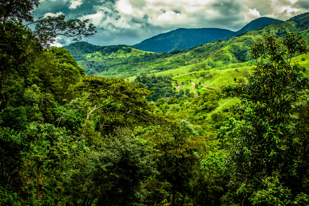 Finca Deborah is exceptionally conscious of our impact on the environment. The farm is fully powered by a solar generation system which supplies electricity requirements for the beneficio and the workers' quarters.